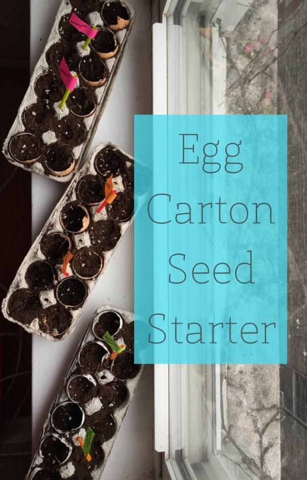Starting a garden in an egg carton