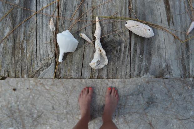 Anna Maria Island - Beach -Shells