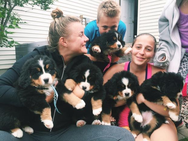 Bernese Mountain Dog puppies